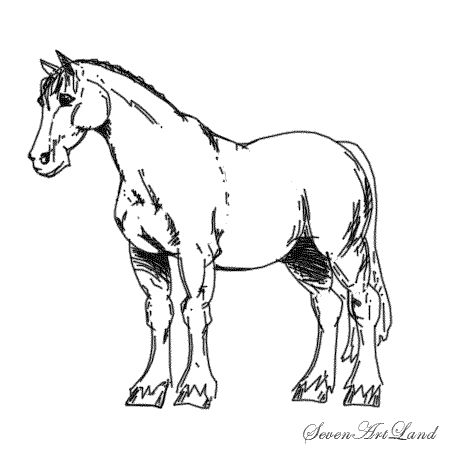 How to draw the Horse of Clydesdale breed with a pencil step by step