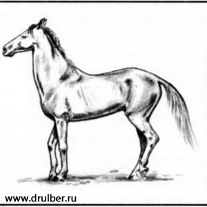 How to draw the Horse with a pencil step by step