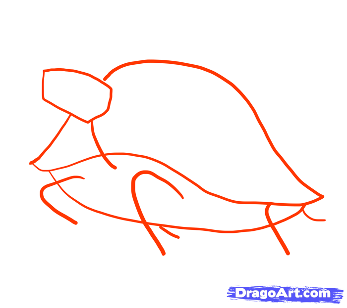 How to draw the Squirrel with a pencil step by step 2