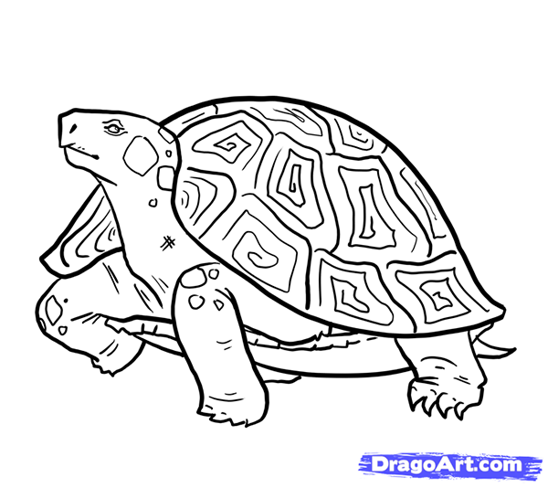As it is easy to draw the Turtle with a pencil step by step