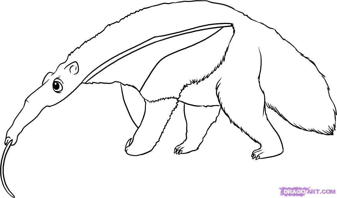 How to draw the Anteater with a pencil step by step
