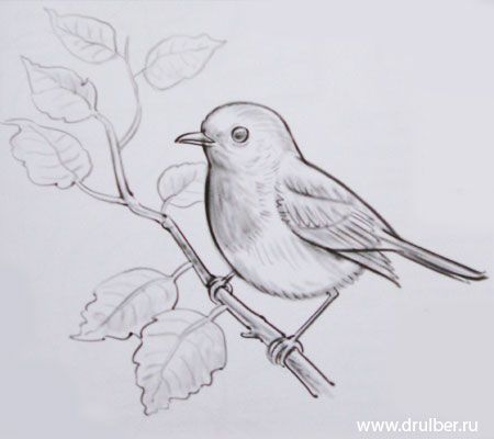 How to draw the Birdie with a pencil step by step