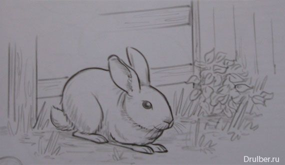 How to draw the Rabbit with a pencil step by step