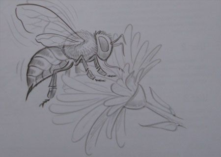How to draw the Bee with a pencil step by step