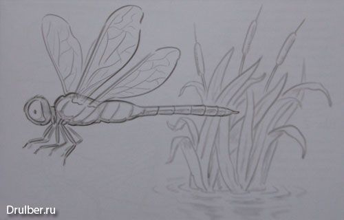 How to draw the Dragonfly with a pencil step by step