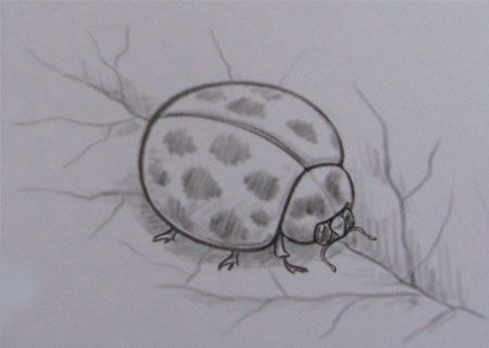 How to draw a ladybug with a pencil step by step