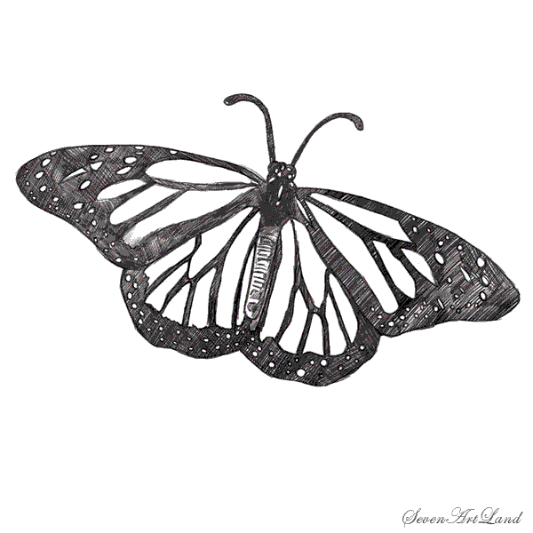 How to draw the Butterfly the Monarch with a pencil step by step