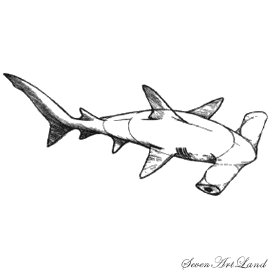 How to draw a molotogolovy shark with a pencil step by step