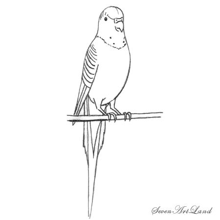 How to draw a wavy Parrot with a pencil step by step