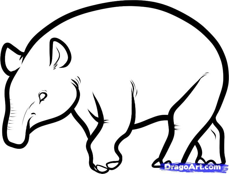 How to draw a Malayan tapir with a pencil step by step