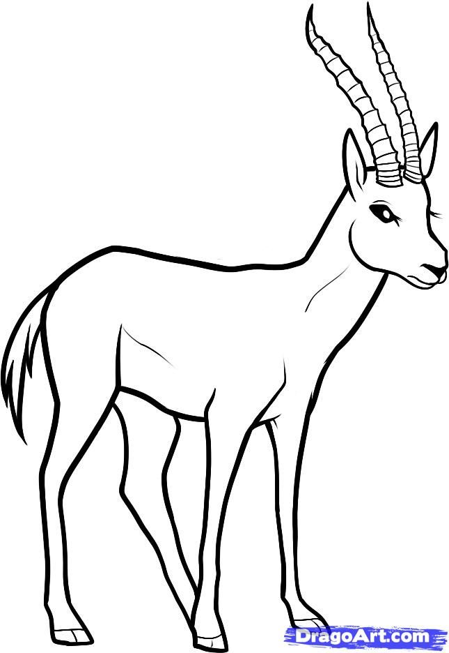How to draw the Gazelle with a pencil step by step