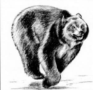 How to draw the Running bear with a pencil step by step