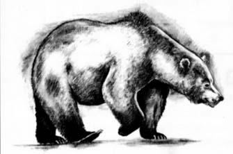 How to draw a bear in the movement with a pencil step by step