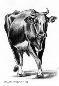 How to draw a cow in the movement with a pencil step by step