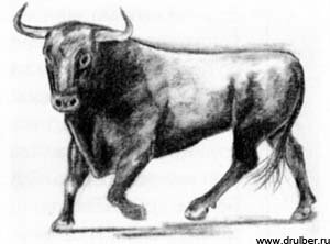 How to draw a bull with a pencil step by step