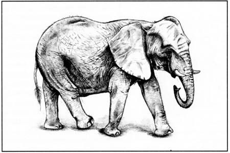 How to draw the Elephant in the movement with a pencil step by step