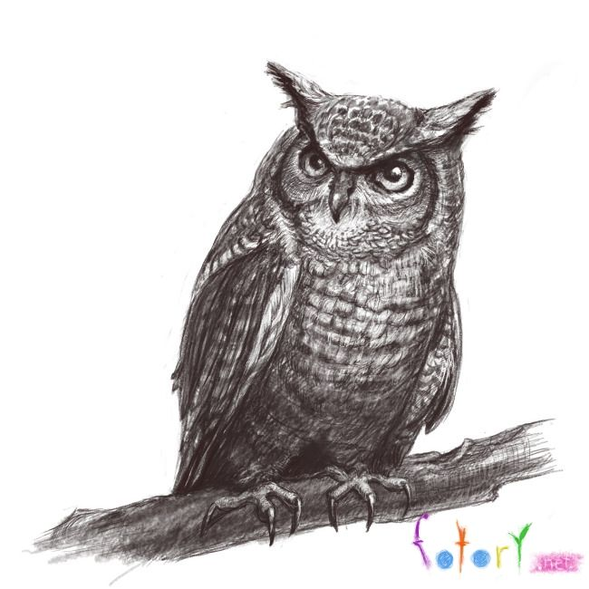 How to draw a realistic owl (eagle owl) with a pencil step by step