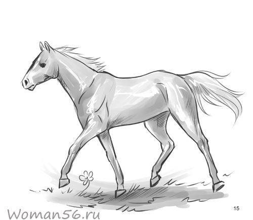 How to draw a horse in the movement with a pencil step by step
