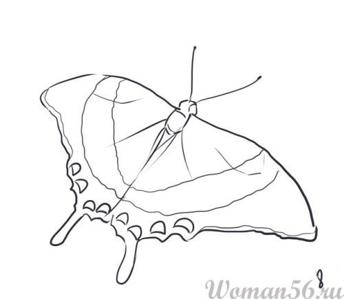 How to draw the Butterfly with a pencil step by step