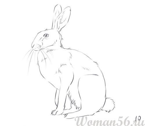 How to draw the sitting hare with a pencil step by step