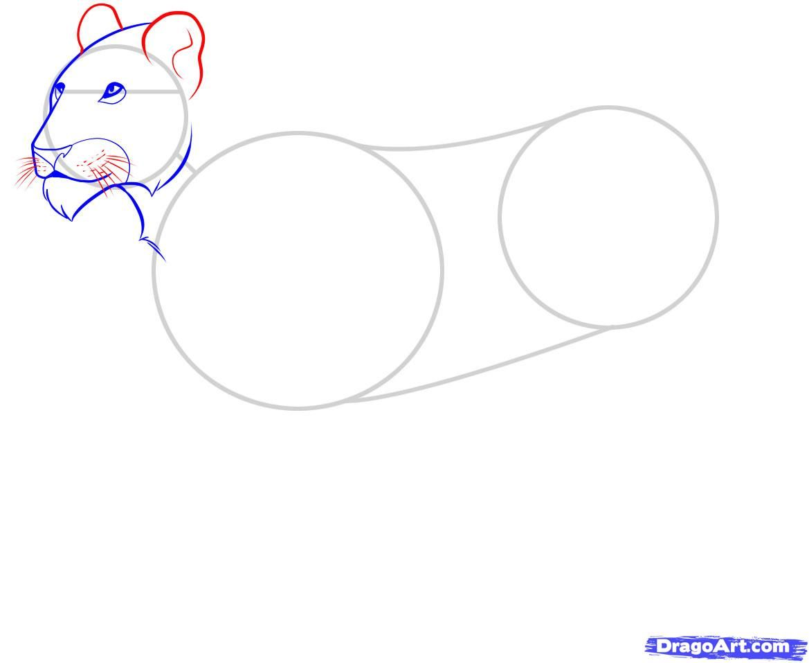 As it is correct to draw a little bear cub with a pencil 5