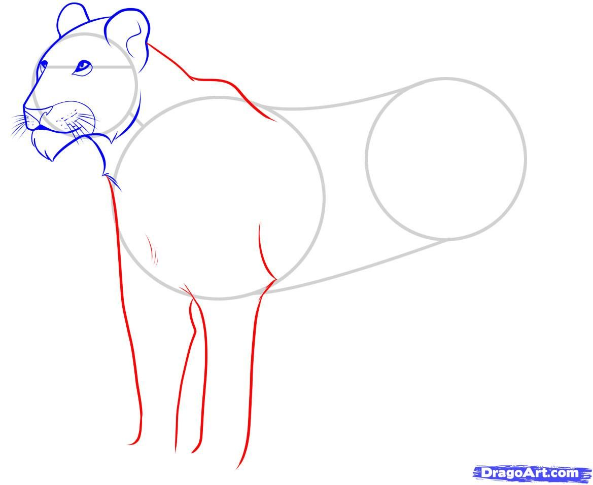 As it is correct to draw a little bear cub with a pencil 6
