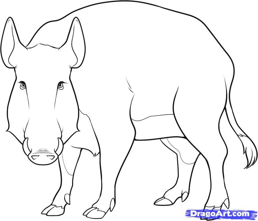 How to draw a wild boar with a pencil step by step