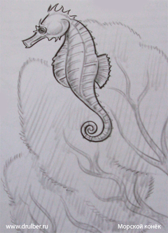 How to draw a sea horse with a pencil step by step
