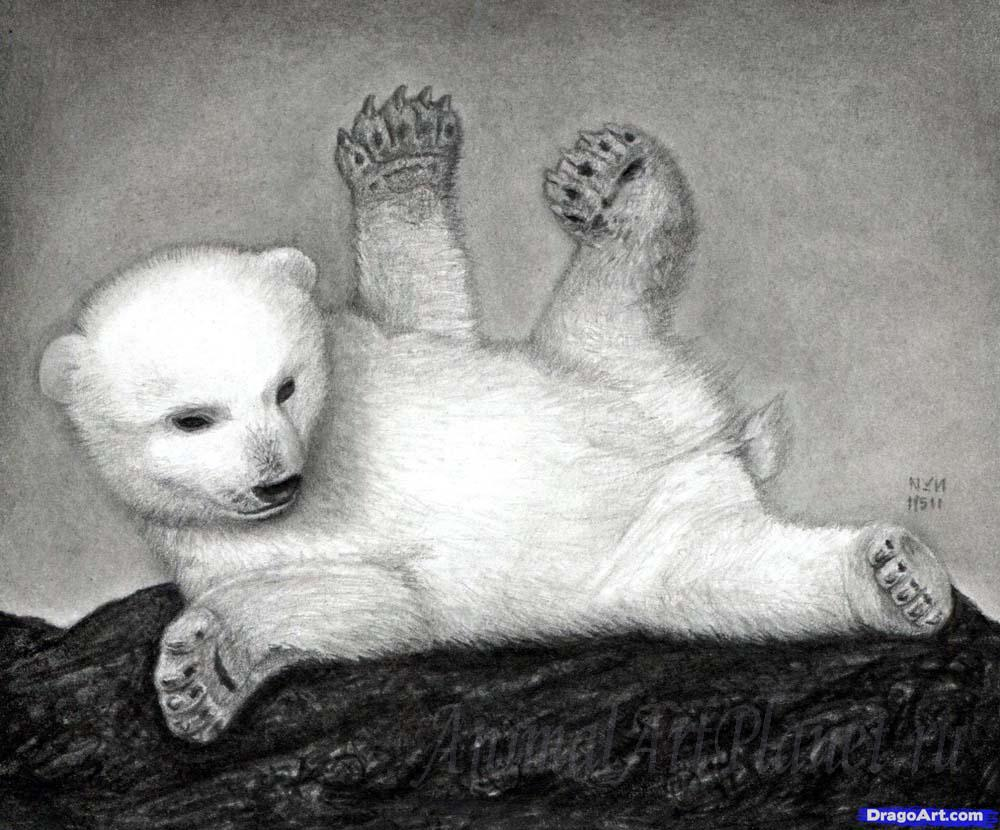 As it is correct to draw a little bear cub with a pencil