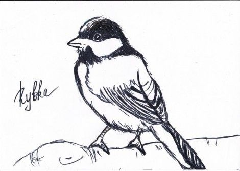 How to draw a titmouse on paper with a pencil