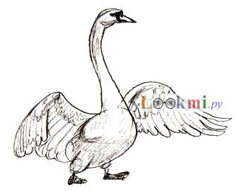 How to draw a swan on paper with a pencil step by step
