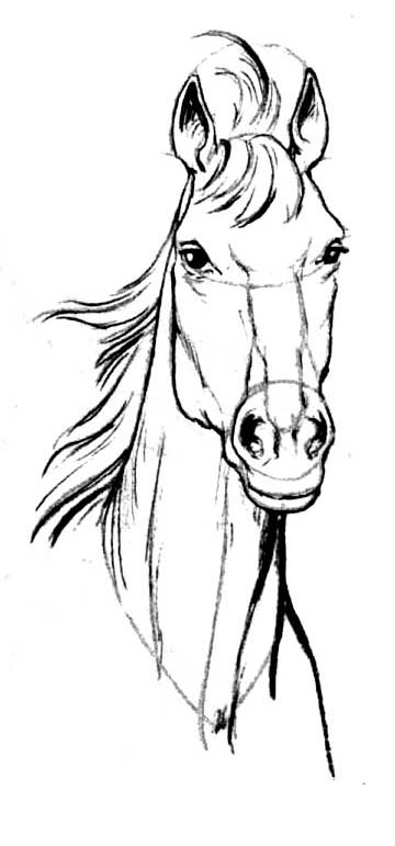 How to draw the head of a horse on paper with a pencil step by step