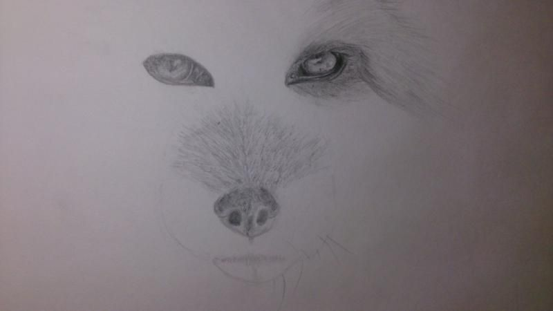 How to draw the head of an angry wolf with a pencil step by step 4