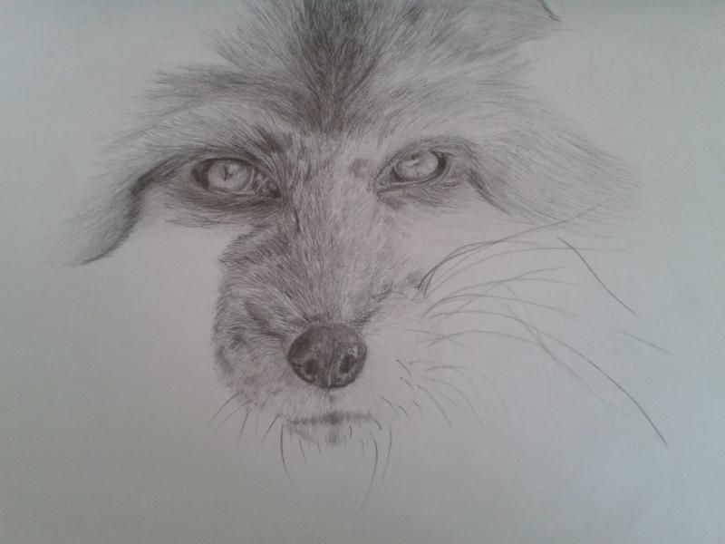 How to draw the head of an angry wolf with a pencil step by step 7