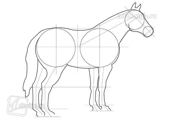 How to draw the Zebra with a pencil step by step 2