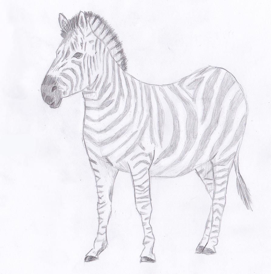 How to draw the Zebra with a pencil step by step