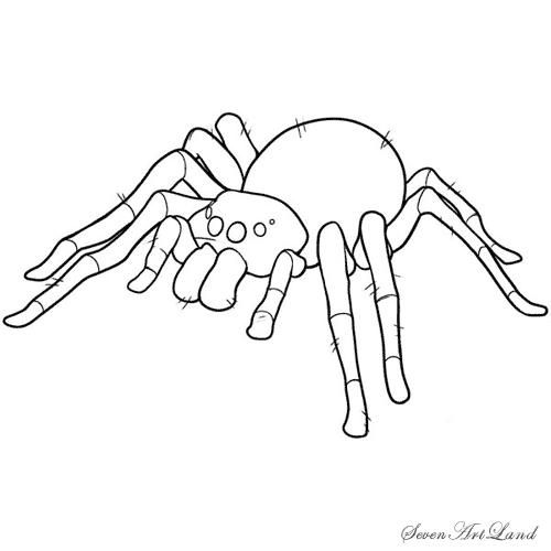 How to draw a bird spider with a pencil step by step