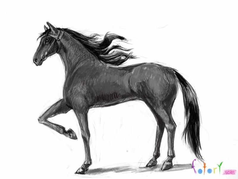 As it is correct to draw a realistic horse step by step