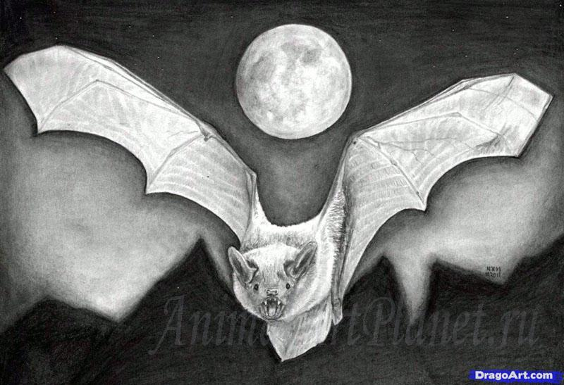How to draw a realistic bat step by step