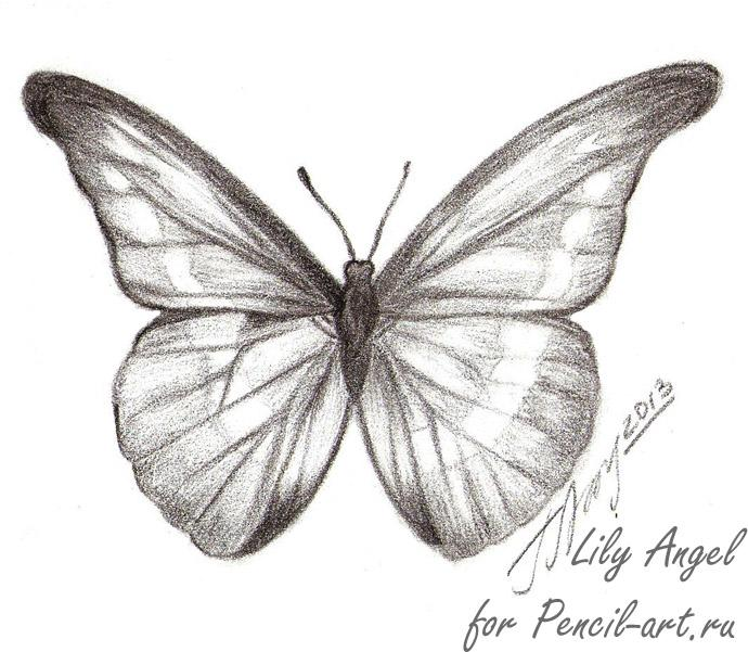 How to draw a butterfly of Morpho Anaxibia with a pencil step by step