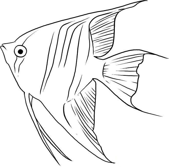 How to draw fish an angel with a pencil step by step