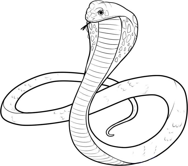 How to draw a royal cobra with a pencil step by step