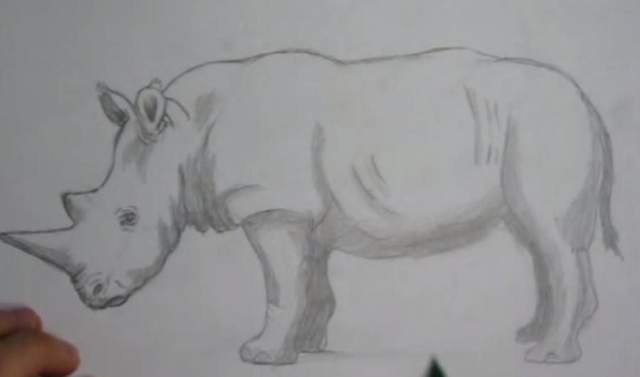 We learn to draw a cow a simple pencil step by step 5