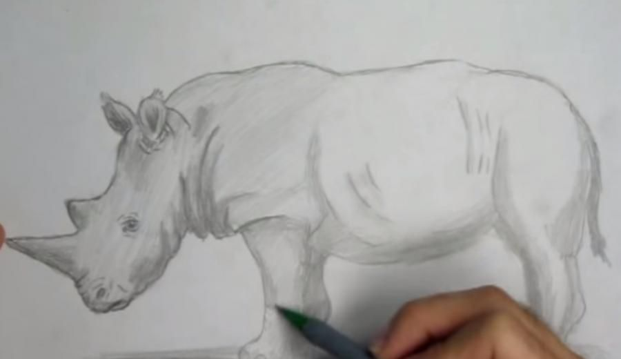 We learn to draw a cow a simple pencil step by step 6