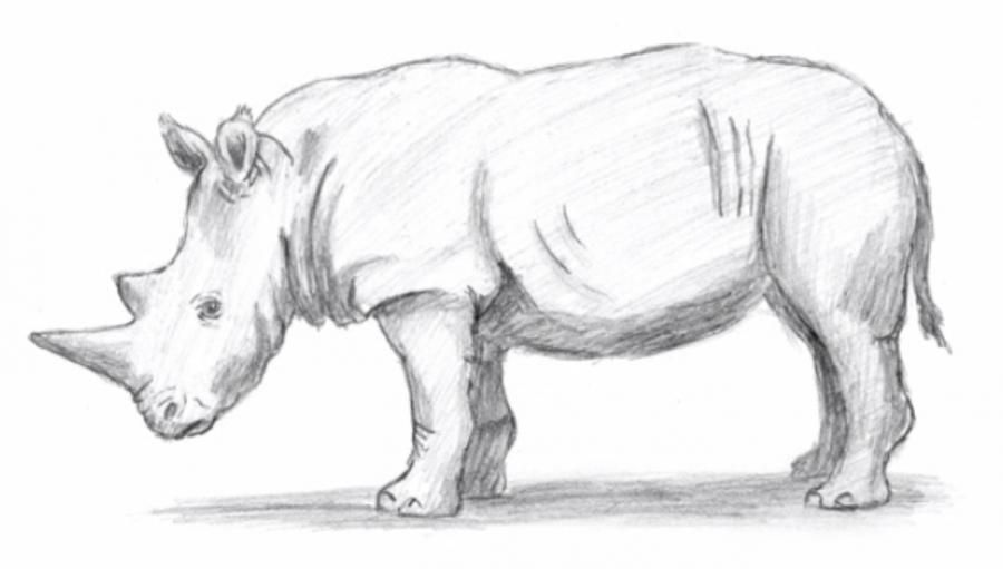 How to learn to draw a rhinoceros a simple pencil step by step