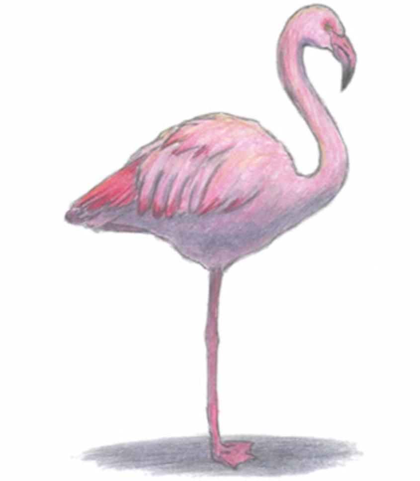 How to learn to draw a flamingo a simple pencil step by step