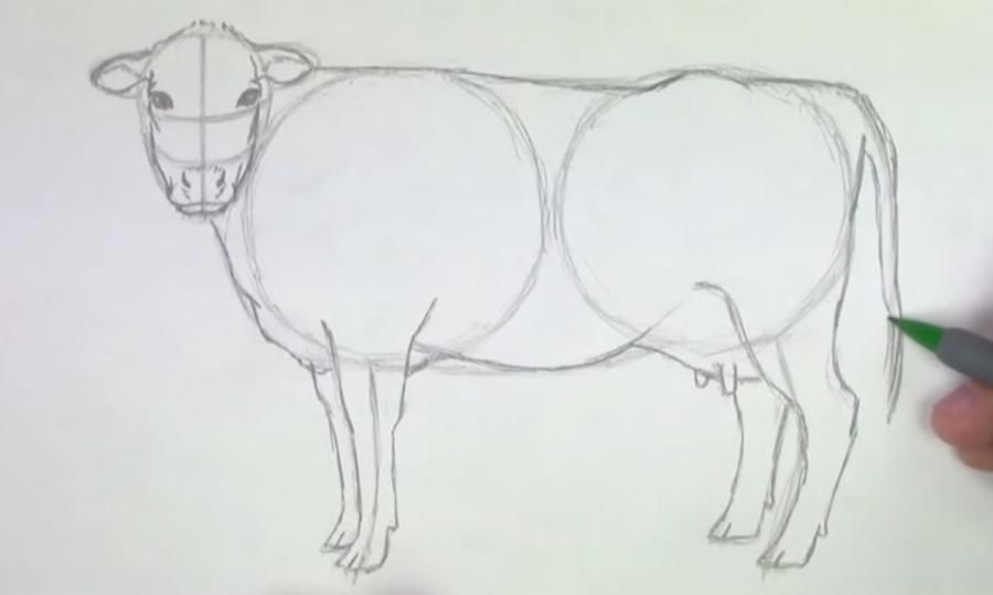How to learn to draw a camel a pencil step by step 4