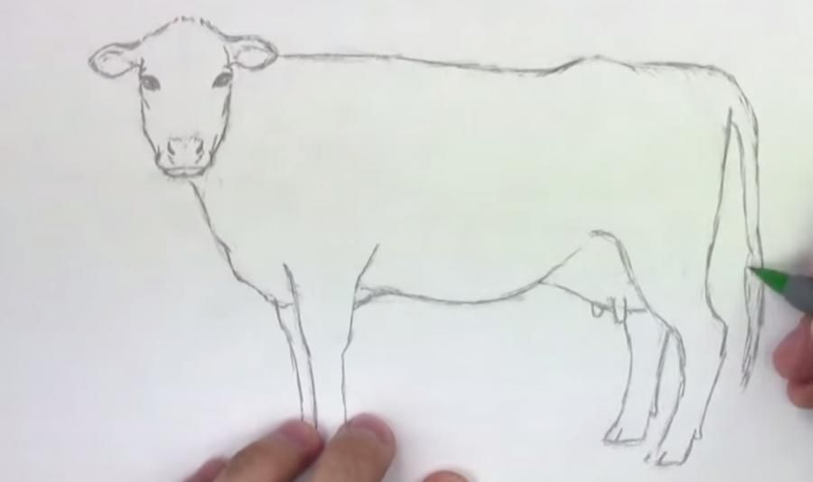 How to learn to draw a camel a pencil step by step 5