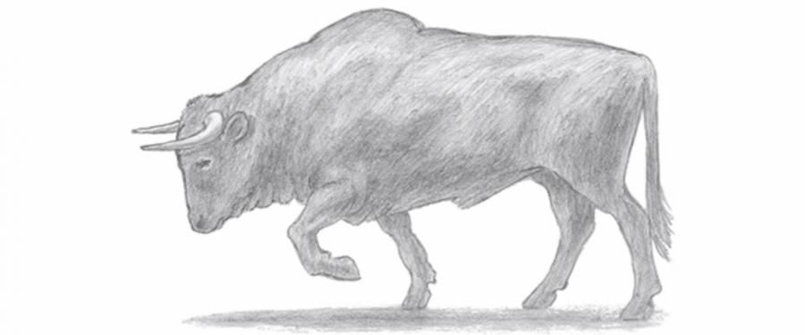 How to learn to draw a bull a simple pencil step by step