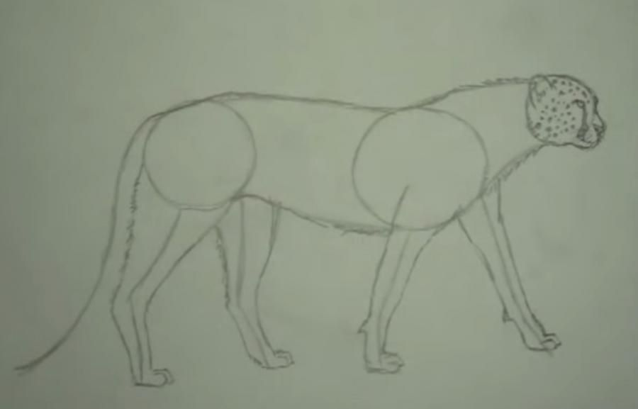 As it is simple to draw a cow on paper with a pencil 4